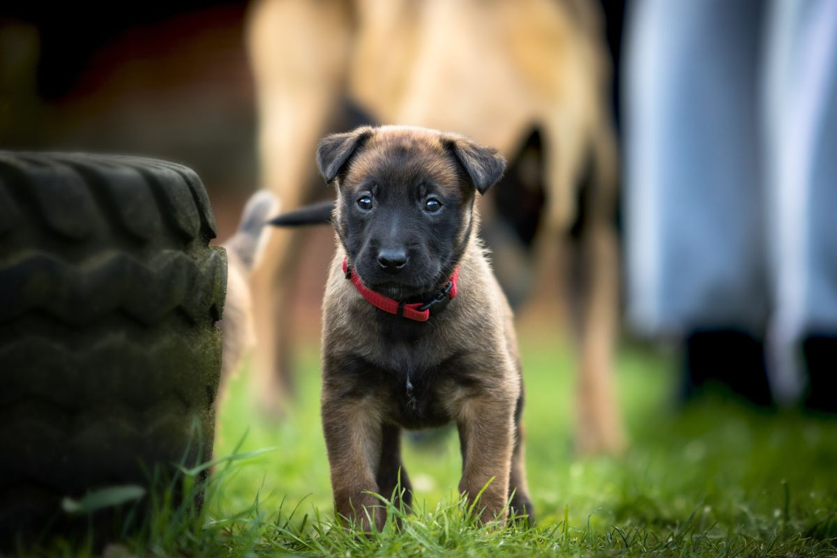 No caigas en su tierna mirada y aprende a alejar a los perros de tu auto