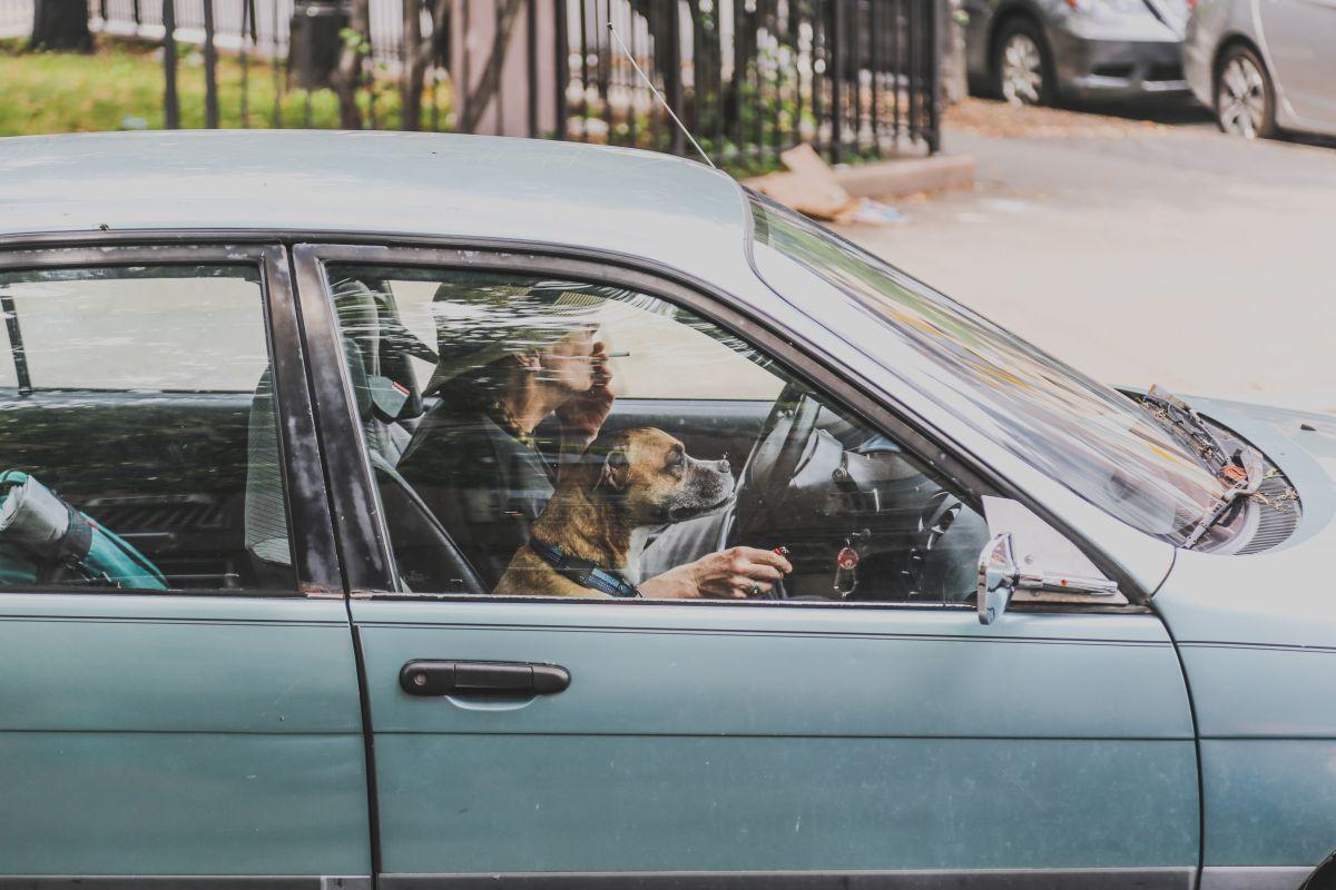 ¿Cómo deben viajar los perros en el auto para ir seguros?