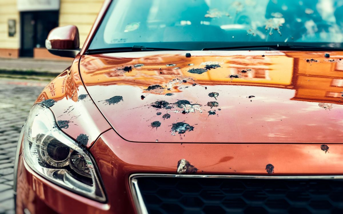 El excremento de pájaros es muy dañino para la pintura de los autos.